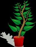Plant, Leaf, Flowerpot, Flora royalty free stock photography