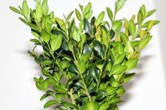 Plant, Leaf, Flowerpot, Tree Stock Photography