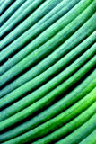 Plant leaf. Fresh texture green plant leaf for background stock photos