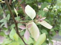 Plant Leaf. Full HD Plant Leaf DSLR Pic Stock Photo