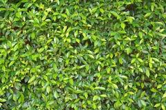 Plant, Leaf, Grass, Tree royalty free stock photo