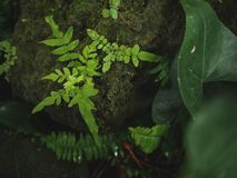 Plant leaf green nature on stone rock moss fern.  royalty free stock photography