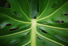 Plant leaf with holes Stock Photos