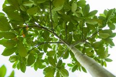 Plant, Leaf, Tree, Branch Royalty Free Stock Images