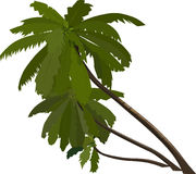 Plant, Leaf, Tree, Branch stock photos