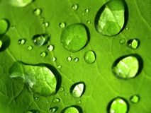 Plant leaf / water drop 06 Royalty Free Stock Photo