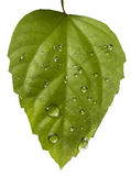 Plant leaf and water drop Stock Photos