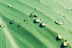Plant leaf with water drops. Close-up Stock Image