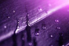 Plant leaf with water drops and light, macro shot. Ultra violet or purple color toned as abstract background for design royalty free stock image