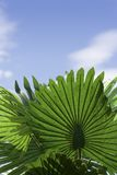 Plant leaves Stock Photos