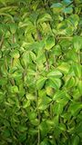 Plant leaves backgroung Stock Photo