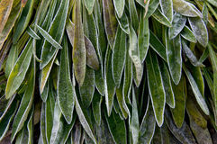 Plant leaves covered with frost Stock Photos
