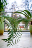 Plant leaves in front window. Small lights in background stock image
