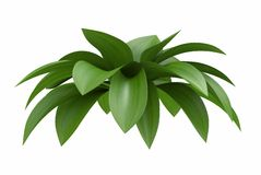 Plant leaves Royalty Free Stock Photography