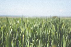 Plant Leaves Growing in Field Stock Photo
