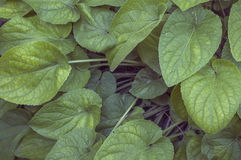 Plant leaves Stock Photo