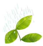 Plant leaves in rain Stock Photo