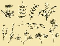 Plant leaves set of botanical hand-drawn vector drawings. Vintage Isolated Elements.  vector illustration