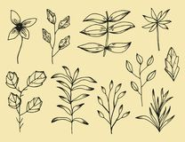 Plant leaves set of botanical hand-drawn vector drawings. Vintage isolated elements. Plant leaves set of botanical hand-drawn vector drawings. Vintage isolated vector illustration