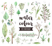 Plant Leaves Watercolor Vector Objects Royalty Free Stock Photos