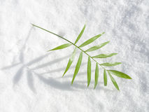 Plant leaves on white snow Royalty Free Stock Images