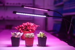 Plant led growth light Stock Images