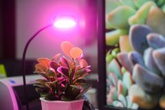 Plant led growth light Stock Image