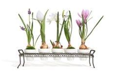 Plant Life Royalty Free Stock Photos