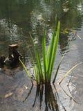 Plant life along the bank Stock Photos
