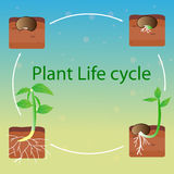 Plant life cycle vector Royalty Free Stock Photos