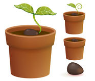 Plant Life Cycle. Vector File EPS10 Stock Photography
