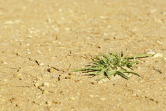Plant life in dry ground Royalty Free Stock Photos