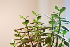 Plant of life Royalty Free Stock Photos