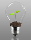 Plant in light bulb stock images