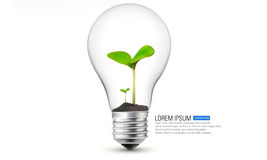 Plant in the light bulb Stock Photography