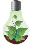 Plant lightbulb Stock Photo