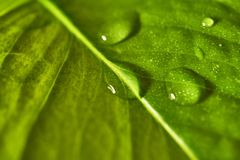 Plant list with a drop of water Royalty Free Stock Photo