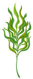 Plant with long leaves Royalty Free Stock Photos