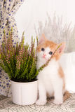 Plant lover. Six weeks old kitten posing with a plant on a windowsill Stock Images