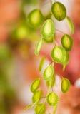 Plant macro Royalty Free Stock Photo
