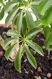 Plant macro Stock Photography