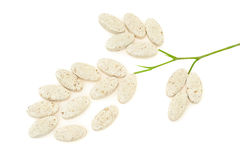 Plant made up of pills Royalty Free Stock Photo
