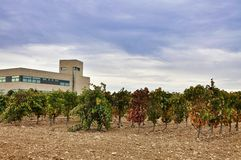 Plant for making wine and jamon in Olite. Royalty Free Stock Photography