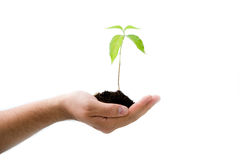 Plant in male hand Stock Photos