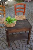 Two old wooden chairs, stuffed and a vintage table with an evergreen plant on it. stock photo