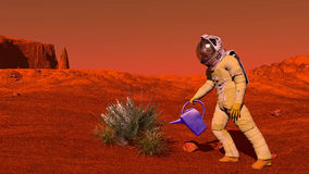 Plant on Mars Stock Images