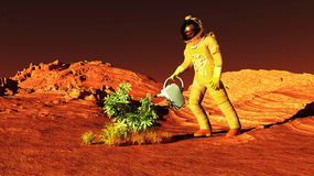 Plant on Mars Stock Photos