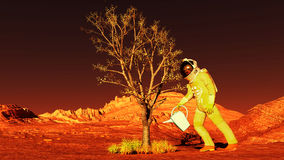 Plant on Mars Stock Image