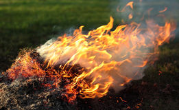 Plant material. Illegal burn plant litter, dry grass in fire, plant material stock photo