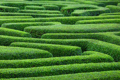 Plant maze. From top view Royalty Free Stock Photos